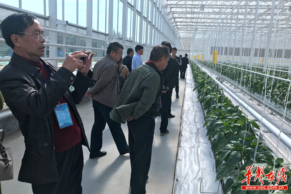 潍坊大棚蔬菜走俏全国 湖南学员:结合实际发展本地农业