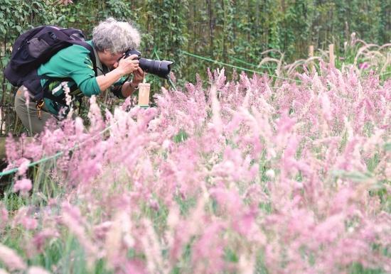 【湖湘自然笔记】在秋季,坠入粉红色海洋