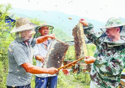 养蜂助增收