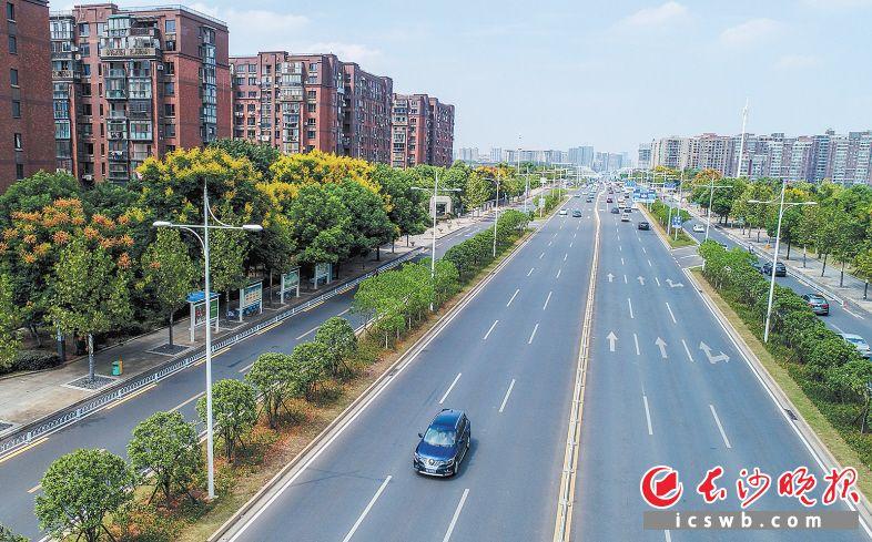 芙蓉南路道路干净整洁,路边的绿化带色彩亮丽。长沙晚报全媒体记者 邹麟 摄