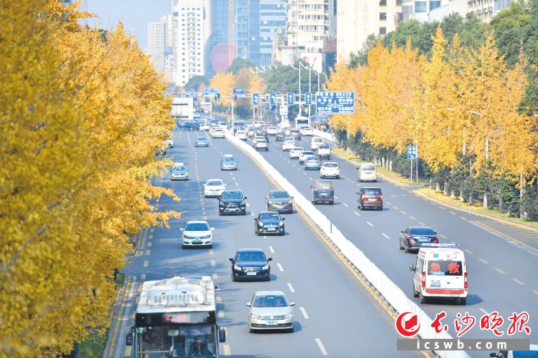 缤纷的绿化为长沙幸福城市添彩