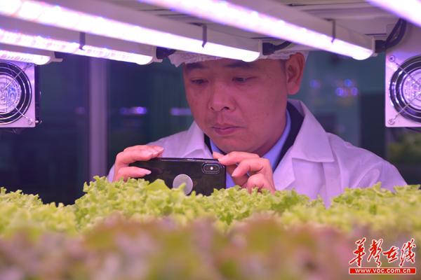 【湘农走进日韩】开在地铁站的垂直农场 学员:今后会有广泛应用