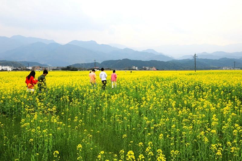 崀山景区2月27日恢复开放,万亩油菜花海待客来