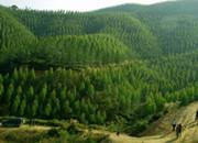 今年全省计划人工造林155万亩,已完成近半