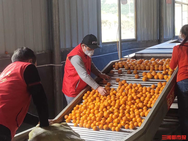 """""""感动湖南人物""""曾宪国:发动家乡果农献爱心,30吨冰糖橙运往黄冈"""