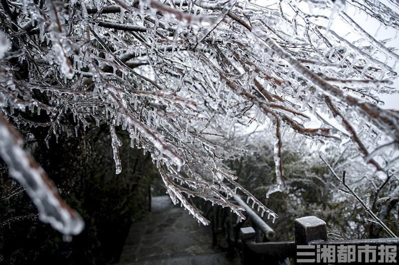 张家界天门山:降雨降温后现春季雾凇美景