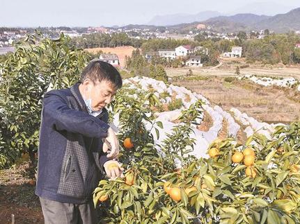 """【湖南信息化助农在行动】湖南农产品营销平台""""湘农荟""""上线"""