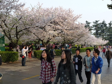 女大学生微信求包养被骗 中国式教育不该反思?