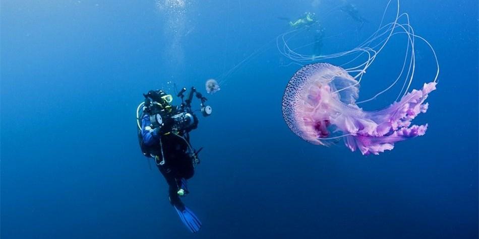 摄影师深海拍摄罕见紫色水母