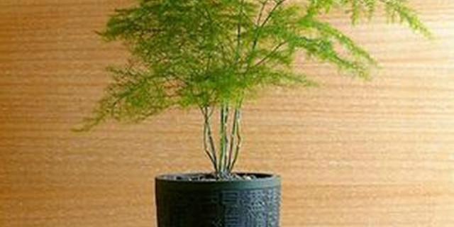 白领远离亚健康 不妨在办公室摆放适合的植物