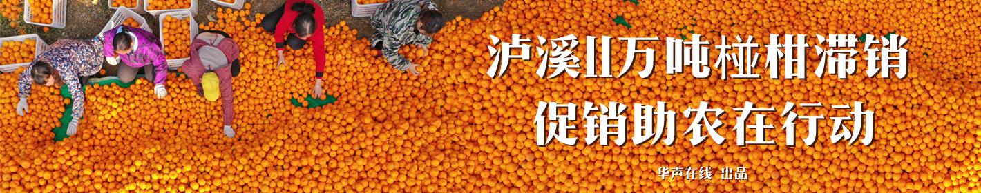泸溪11万吨椪柑滞销  促销助农在行动