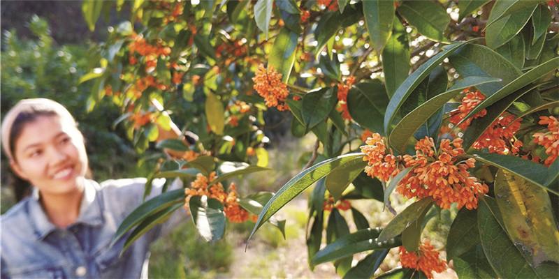 苗木產業助力脫貧致富