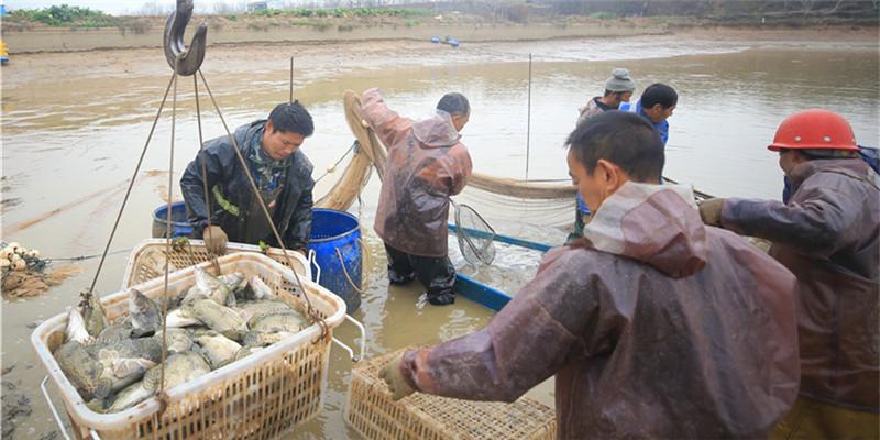 【决胜2020——扶贫印记】鳜鱼肥了 土桥村富了
