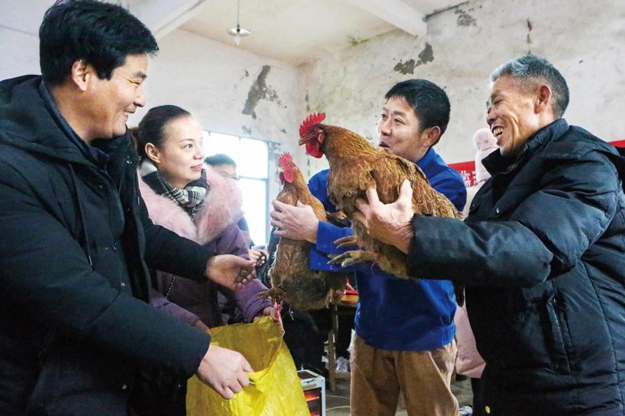 【决胜2020——扶贫印记】看,我们这土鸡多雄壮