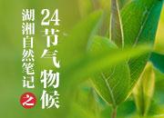 湖湘自然笔记·我们的24节气物候记丨小暑