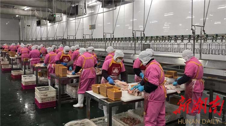 渫水涌春潮 山城建设酣  石门县135家规模企业有序复工,复产率达90.6% 新湖南www.hunanabc.com