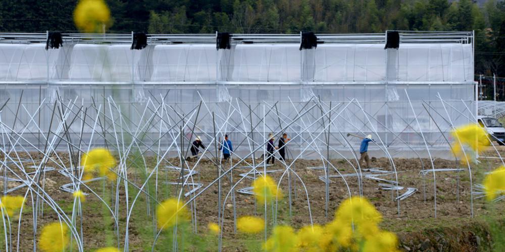 安置就业 助农增收