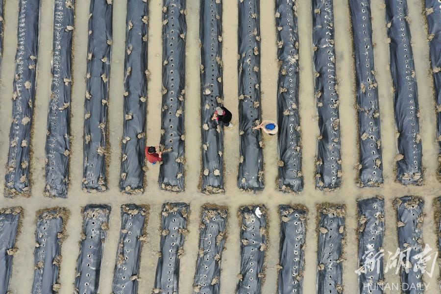 发展特色种植产业 新湖南www.hunanabc.com