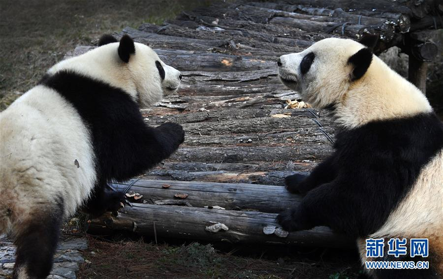 春光明媚熊猫萌 新湖南www.hunanabc.com