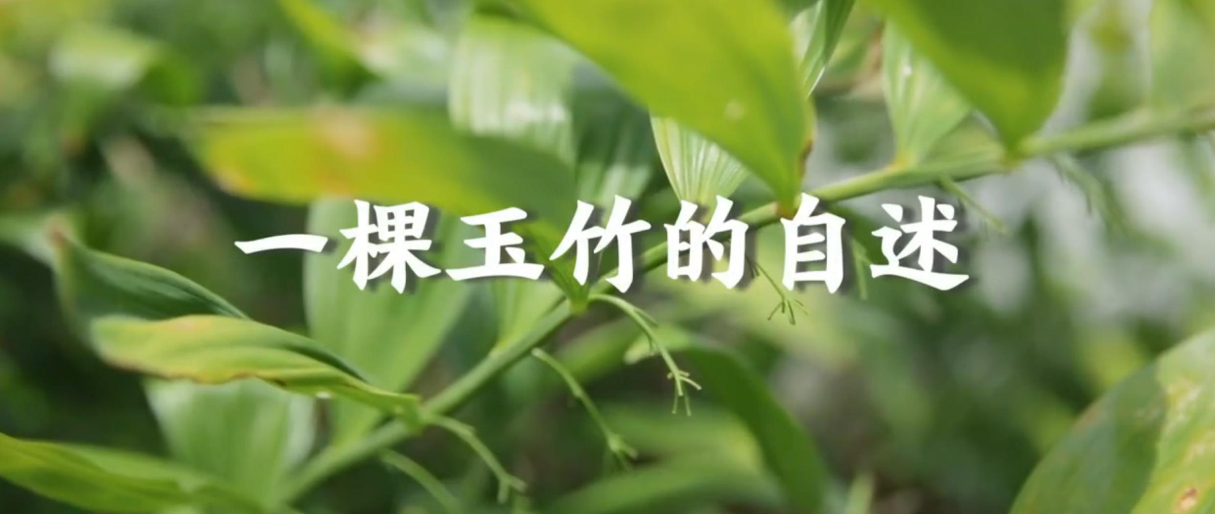 桂阳微纪录:以玉竹之名,助脱贫攻坚