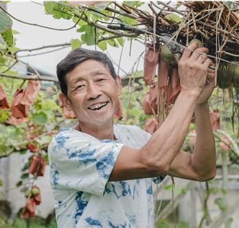 菖蒲塘村的猕猴桃熟了 漫山遍野都是笑容